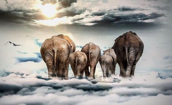 Большие слоны в облаках: плюсы и минусы облачных Hadoop-решений